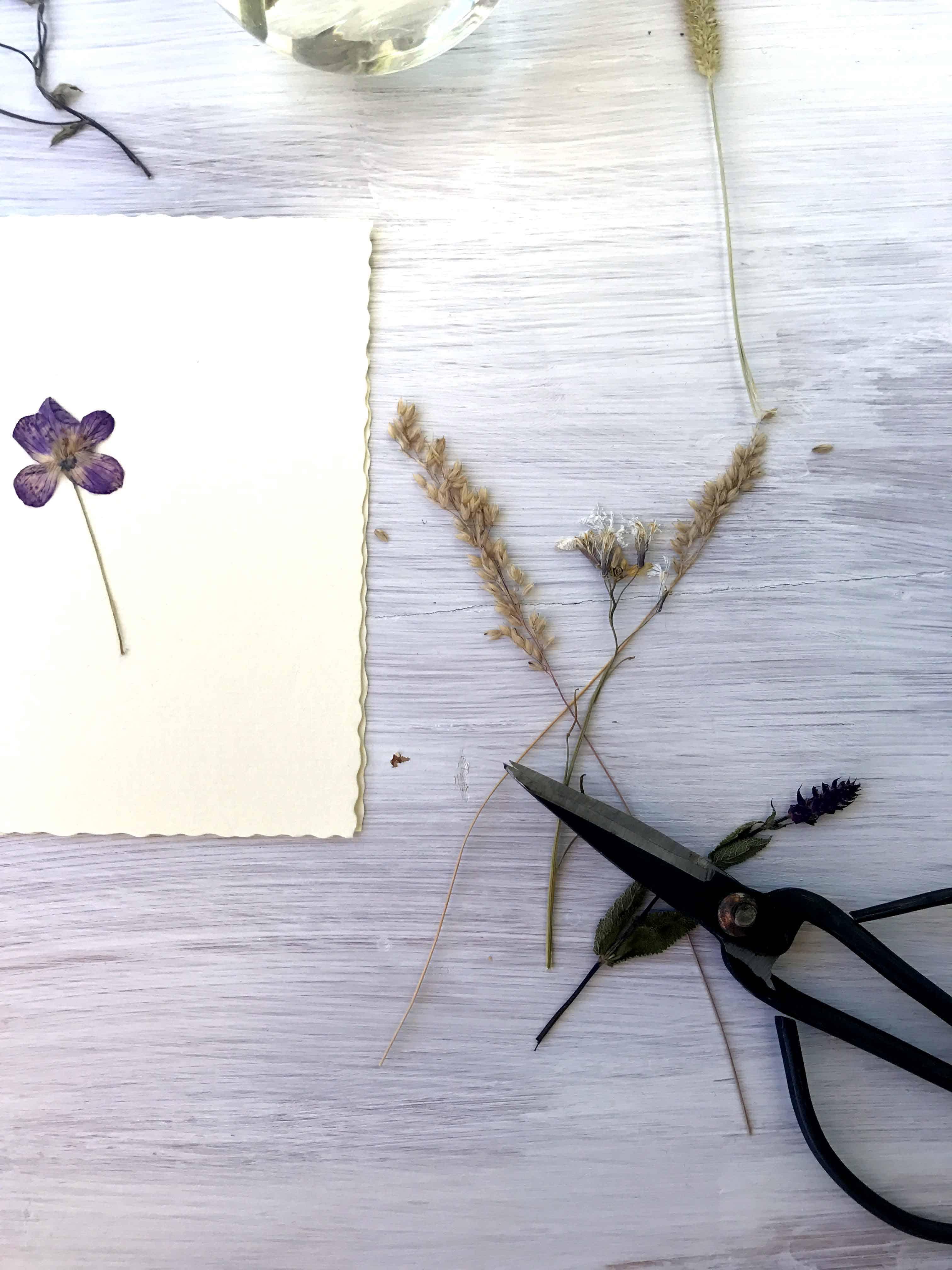 Getrocknete Blumen und Schere