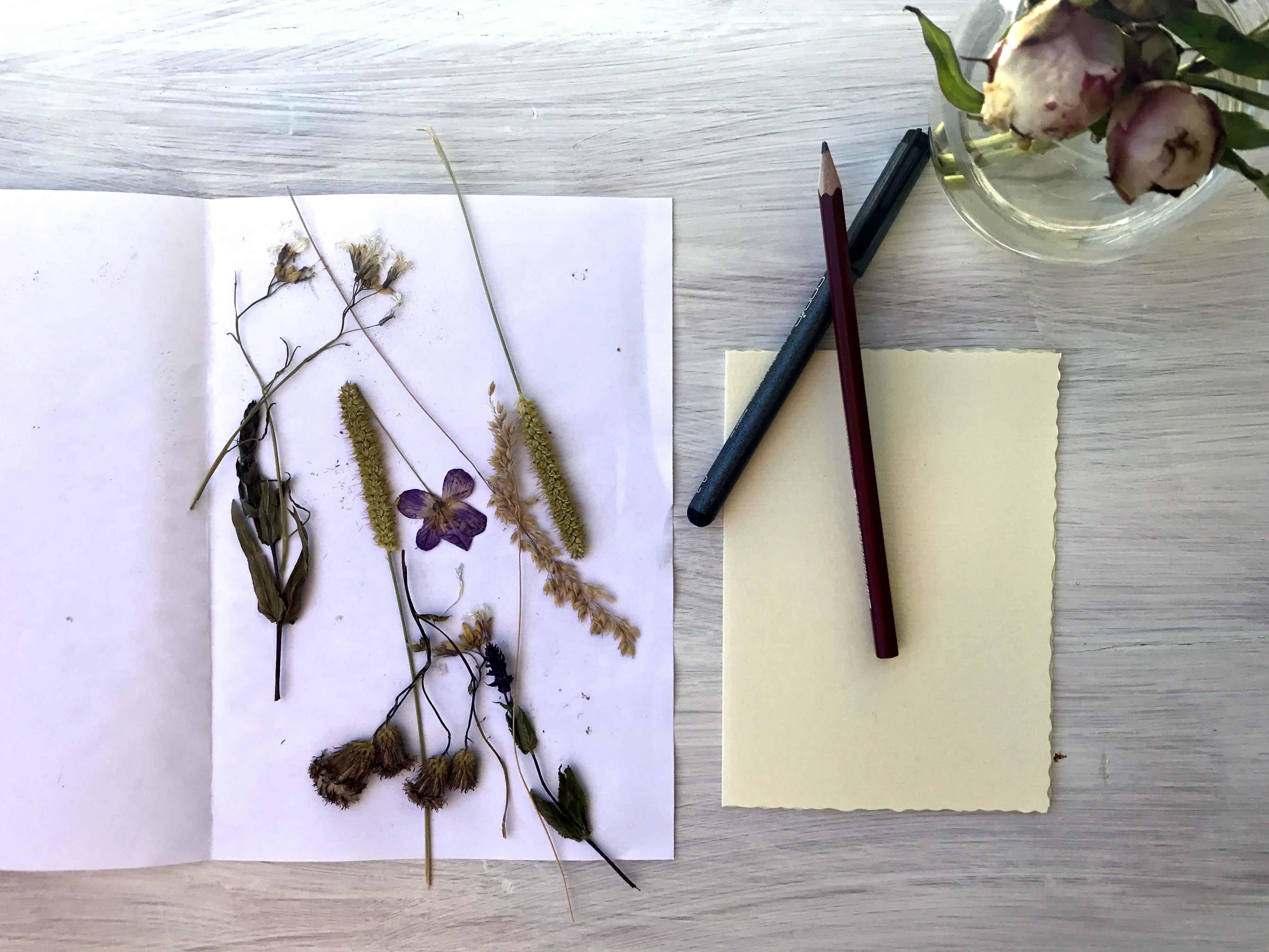 Getrocknete Blumen auf Blatt Papier