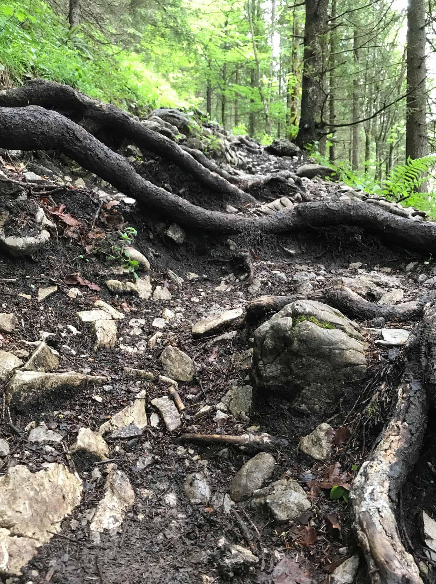 Bild Wurzeln Wanderweg