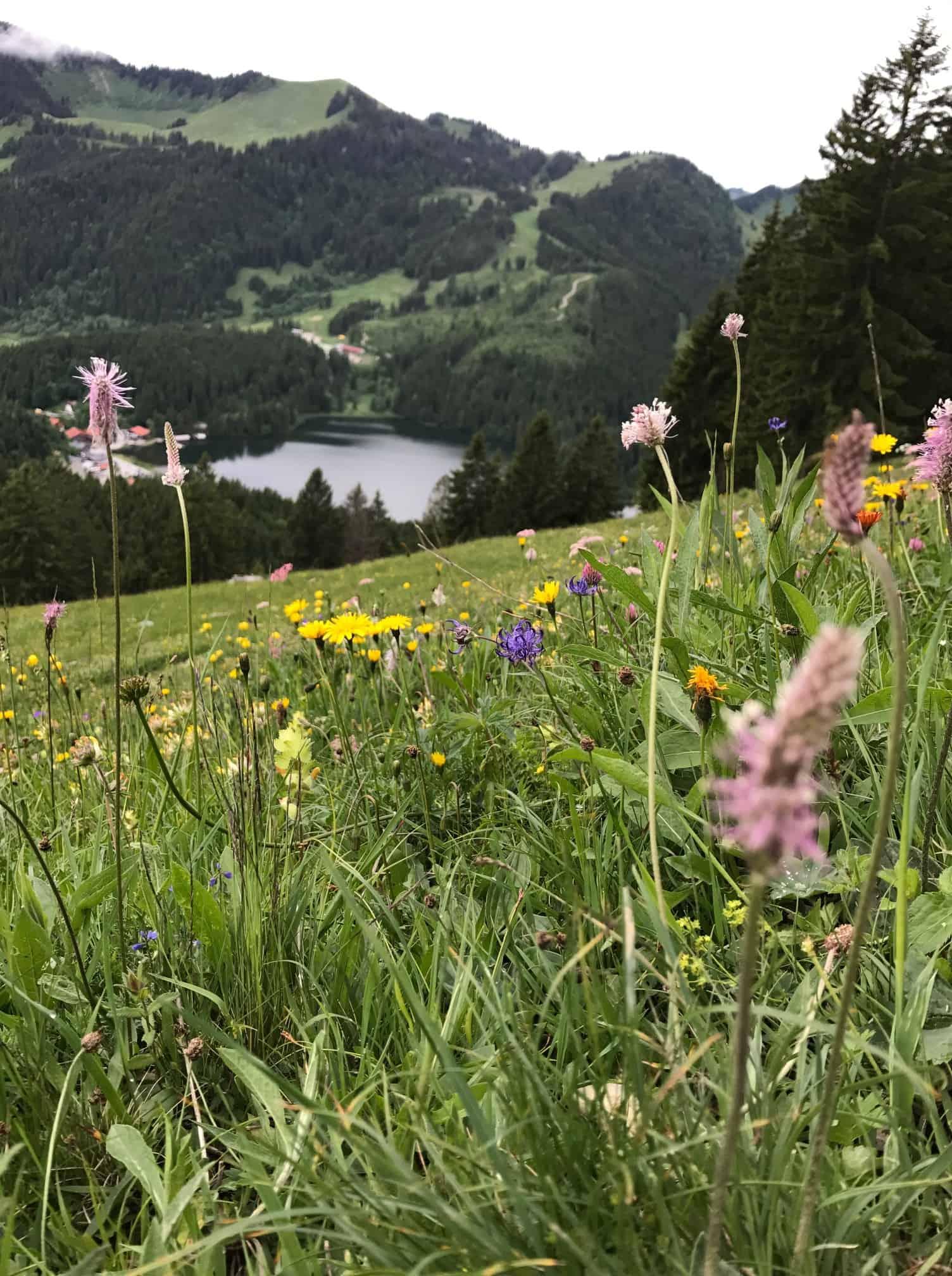 Bild See und Almwiese Spitzingsee