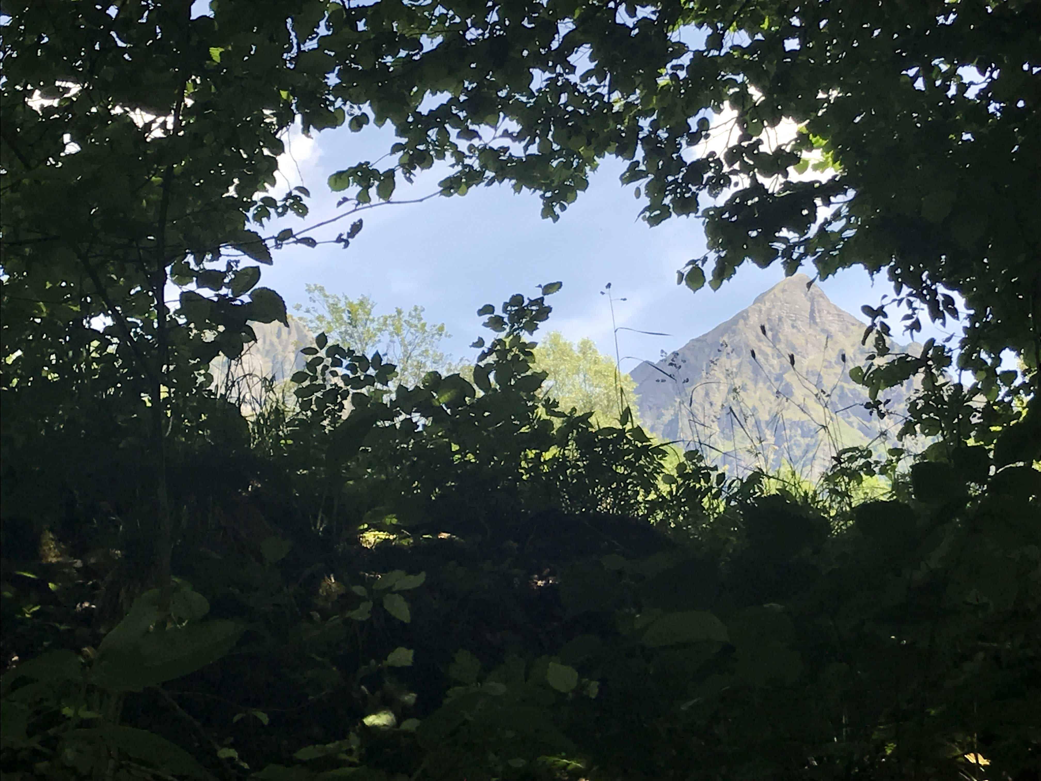 Blätterwald und Berge