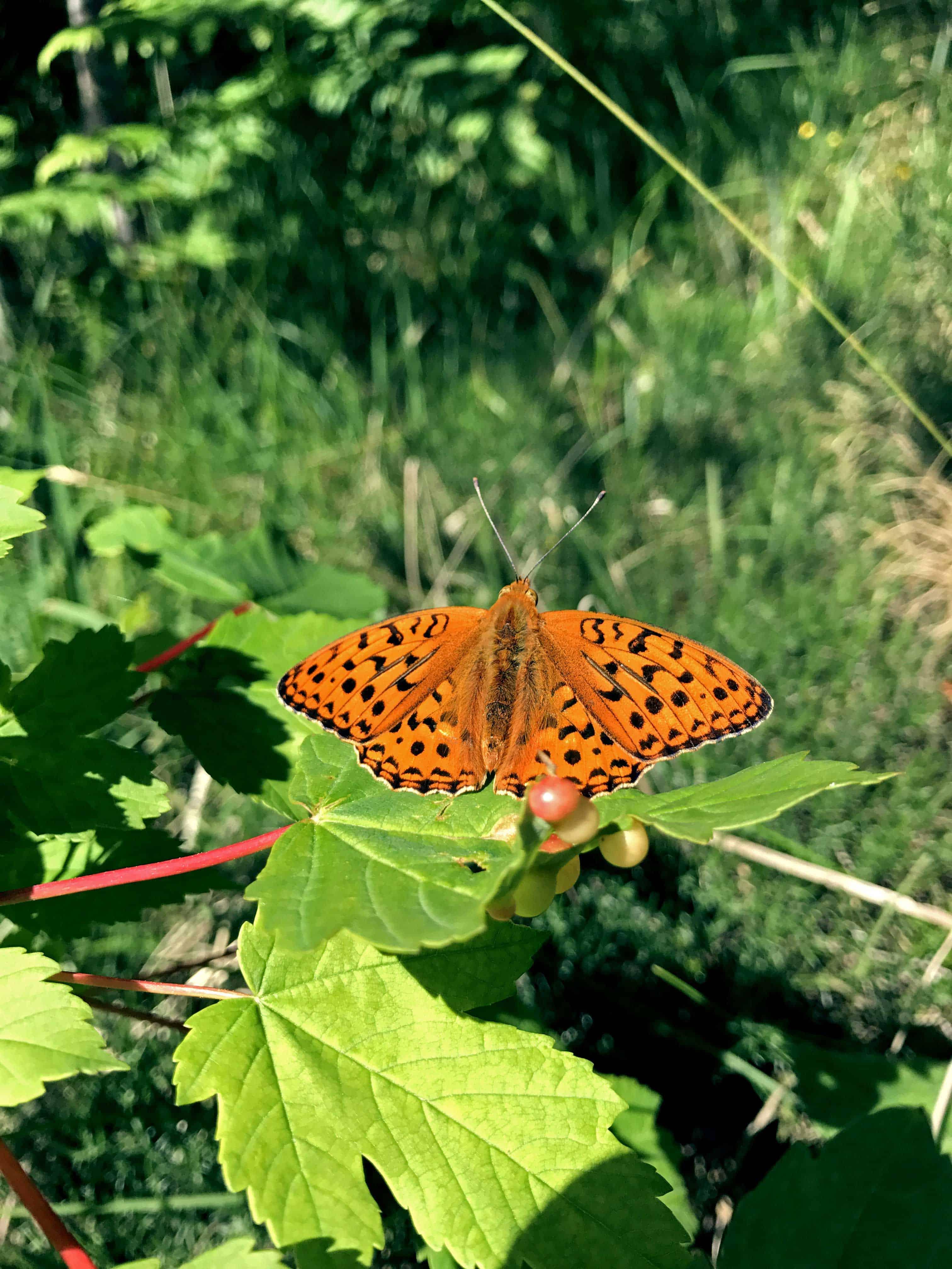 Naturbild mit Schmetterling