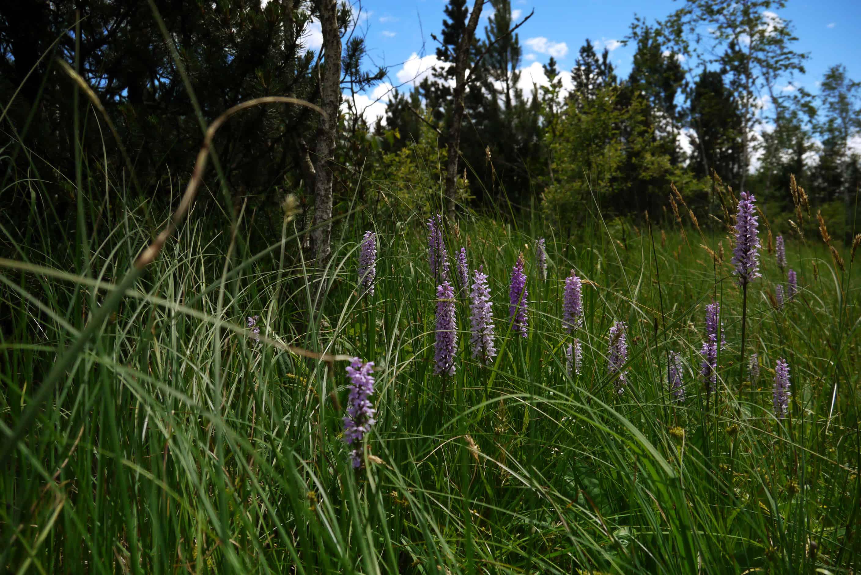 Blumen im Ellbach Moor