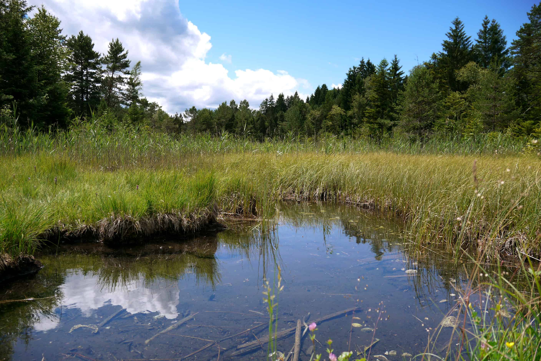 Ellbach Moor