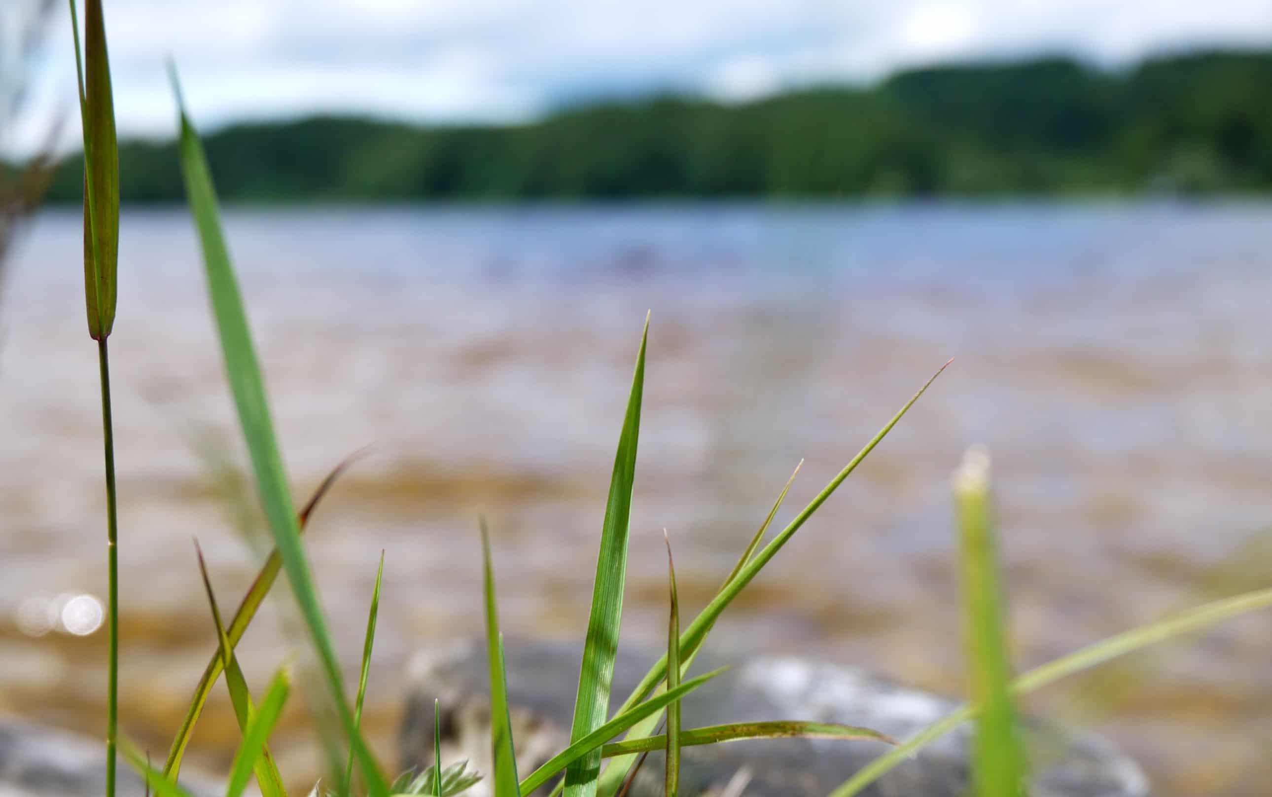 Gras am Kirchsee
