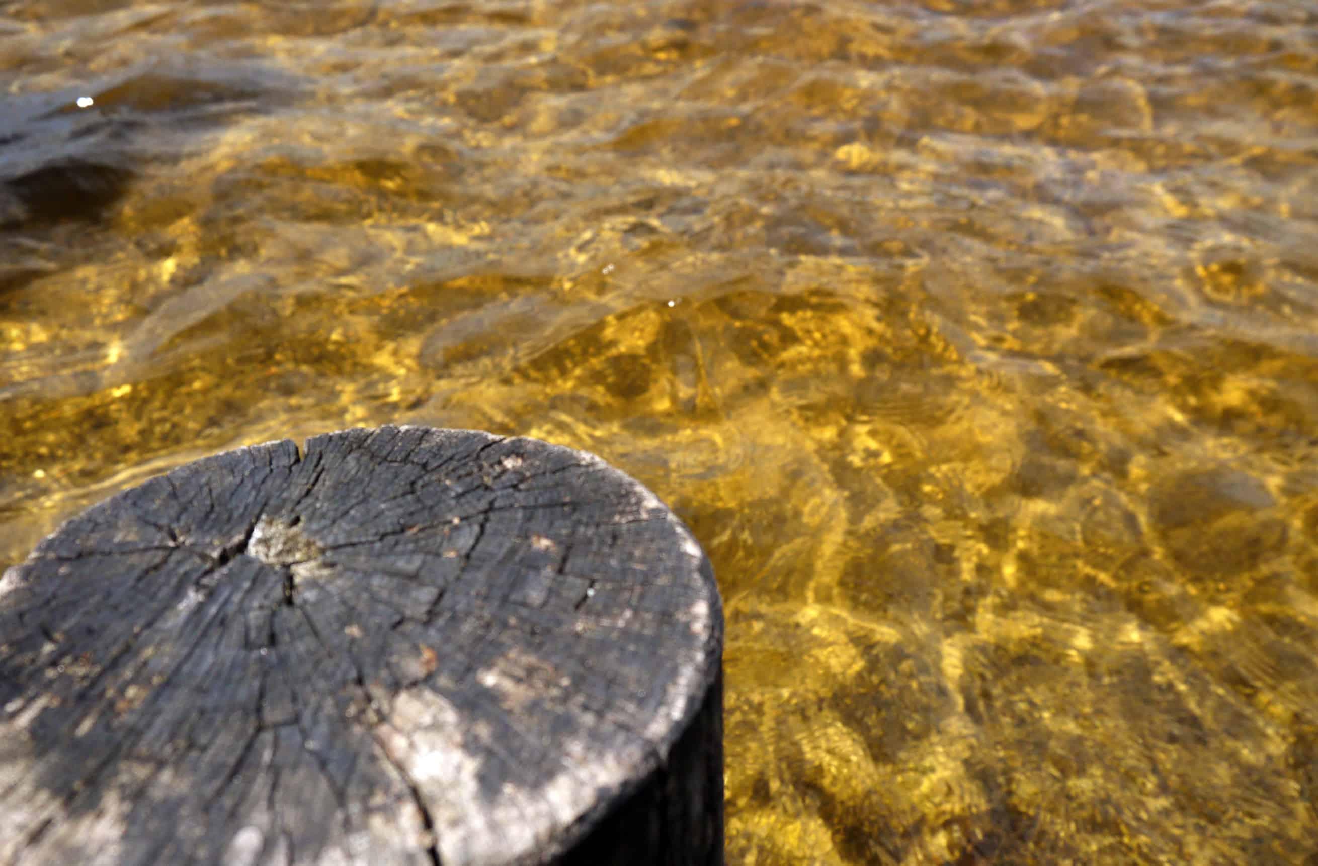 Holz und Wasser am Kirchsee