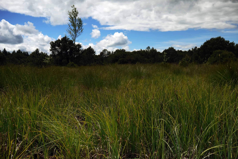 Landschaft Ellbach Moor