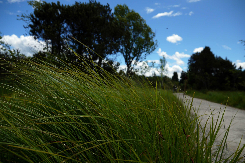 Weg mit Gräsern zum Kirchsee