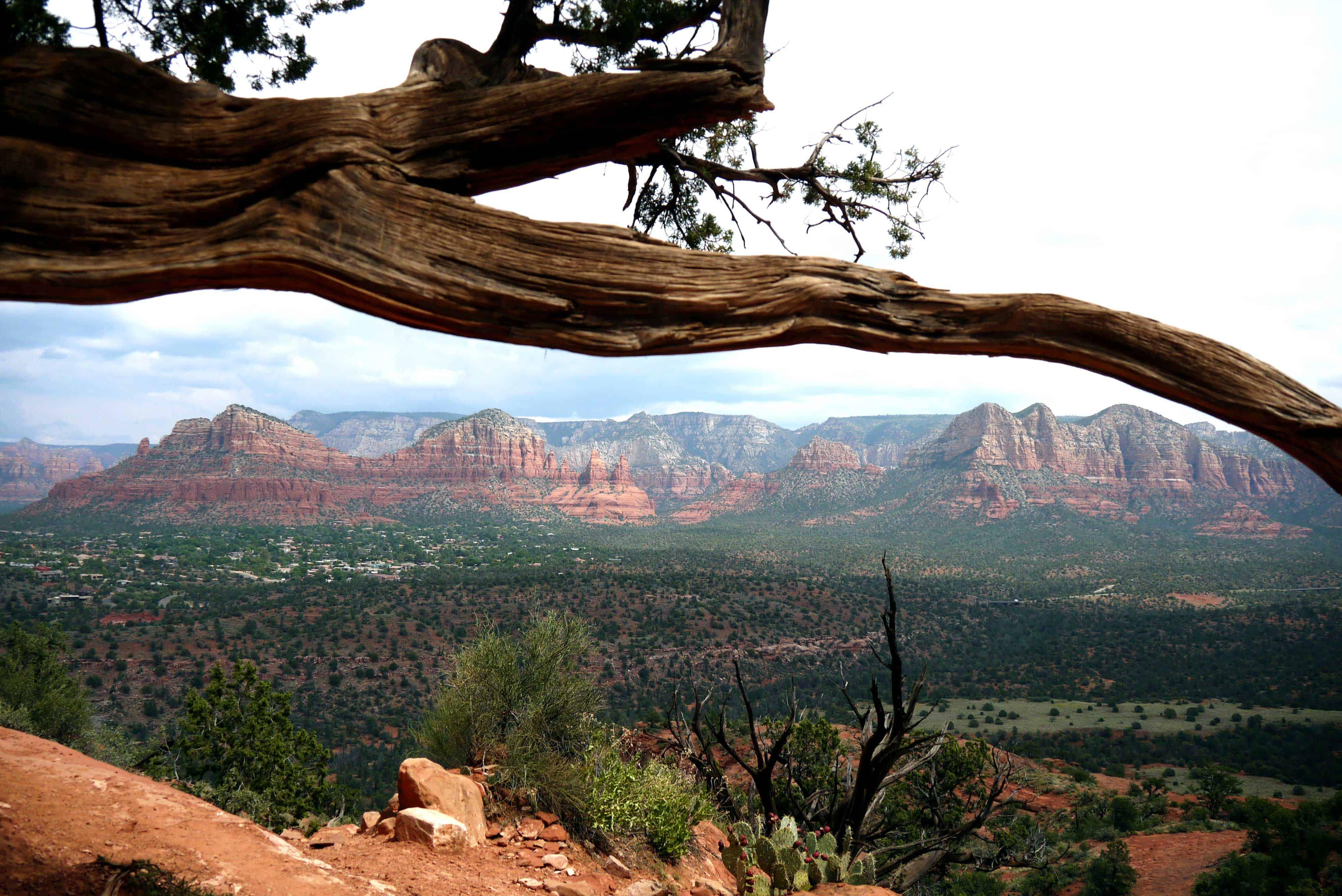 Felsen Landschaft Ast