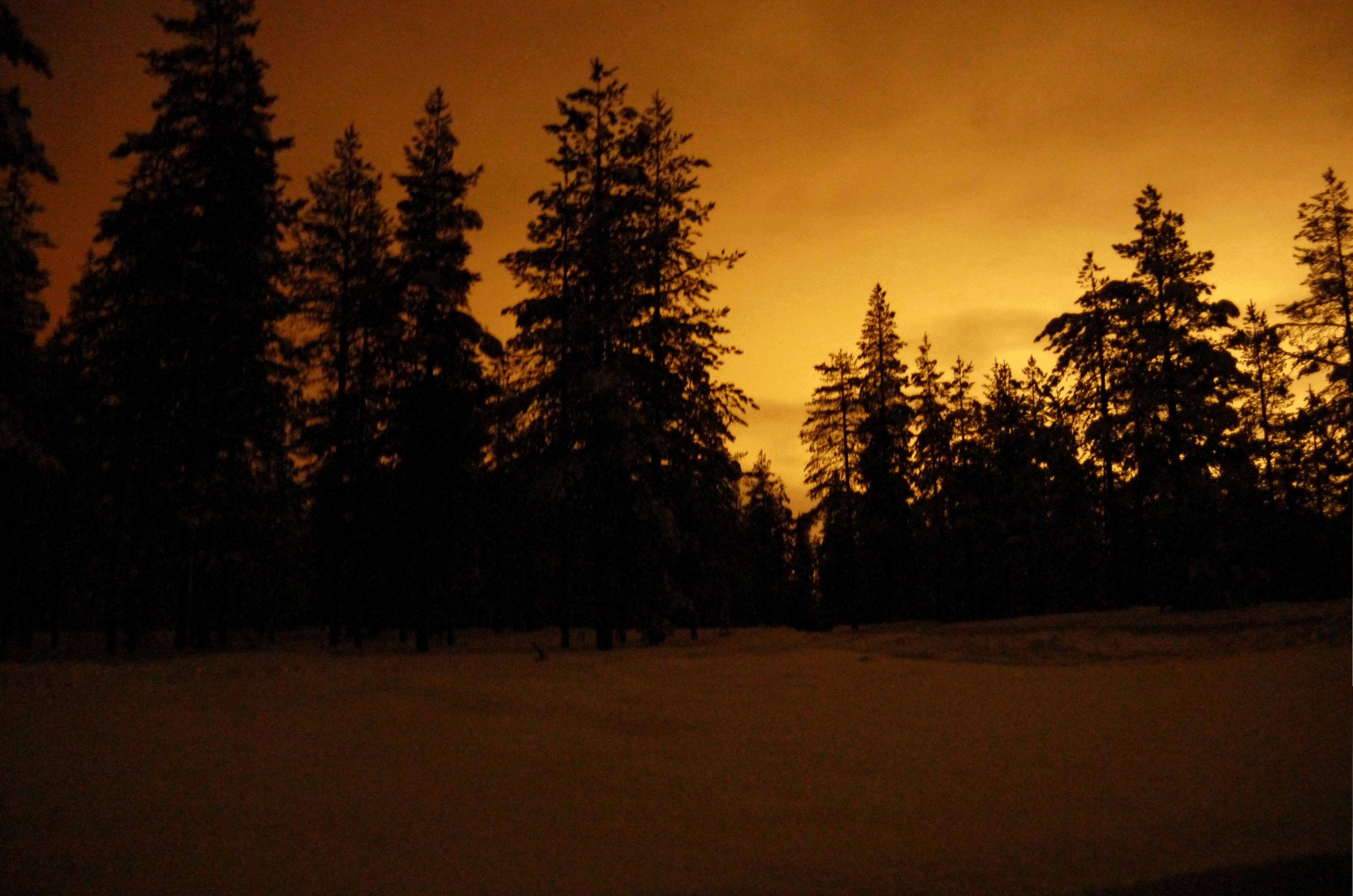 Bäume in der Dunkelheit