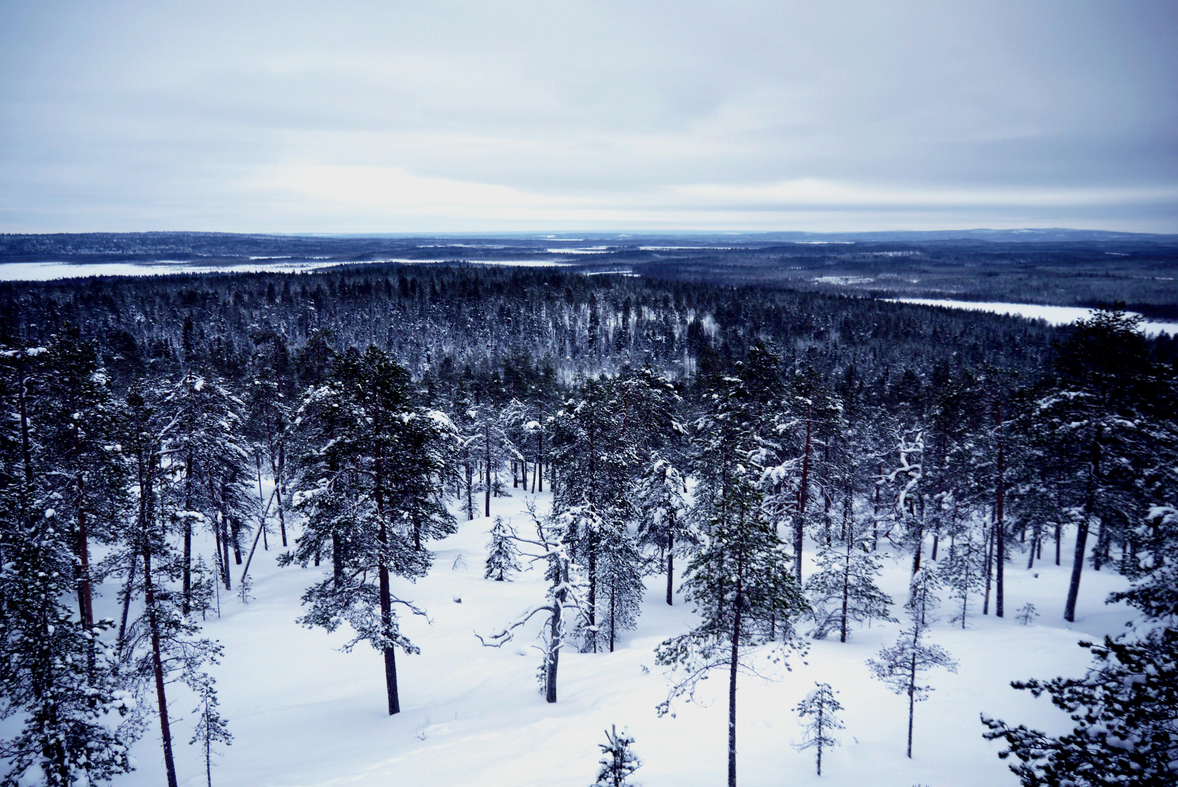 Blick auf Wald