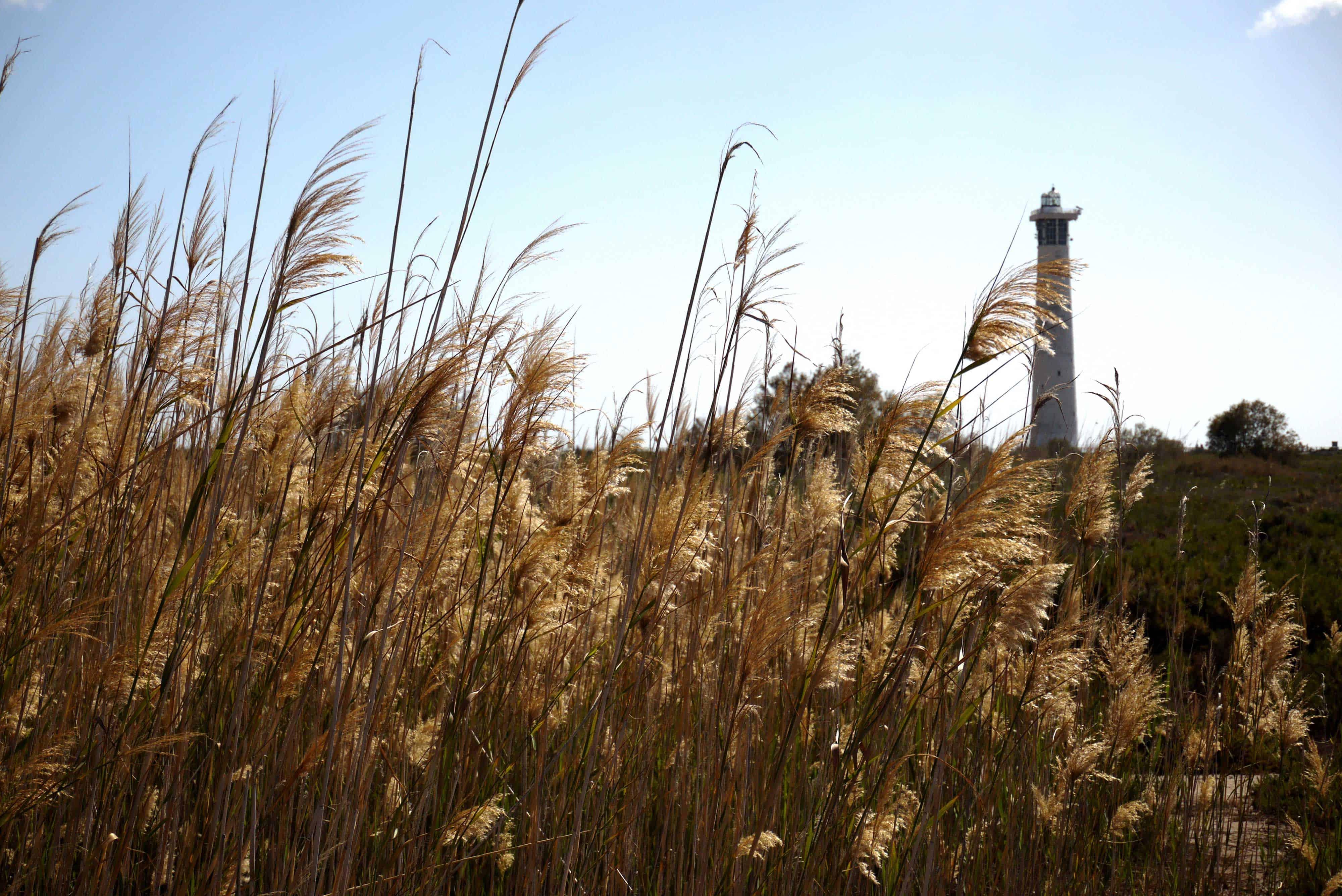 Leuchtturm und hohes Gras